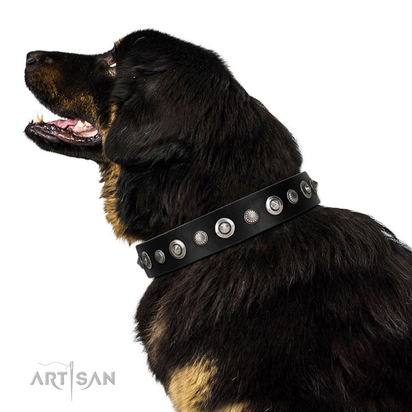 Best quality full grain natural leather dog collar with impressive embellishments