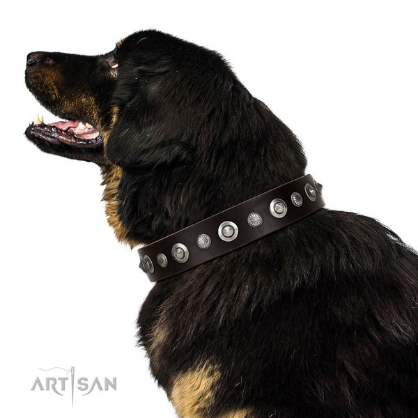 Strong full grain genuine leather dog collar with stylish embellishments