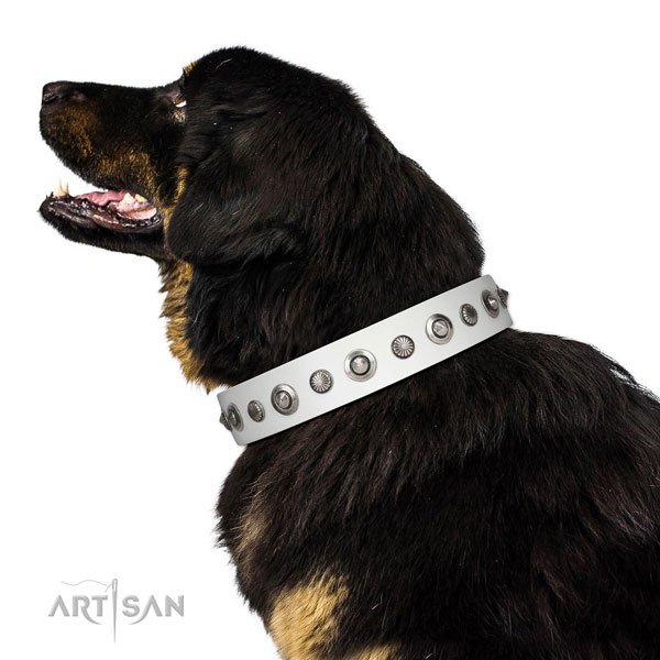 Full grain genuine leather collar with rust resistant fittings for your lovely pet