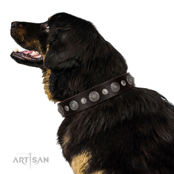 Genuine leather collar with reliable traditional buckle for your impressive canine