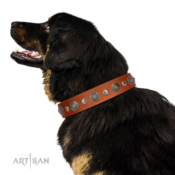 Easy wearing Full grain natural leather dog collar with corrosion proof hardware