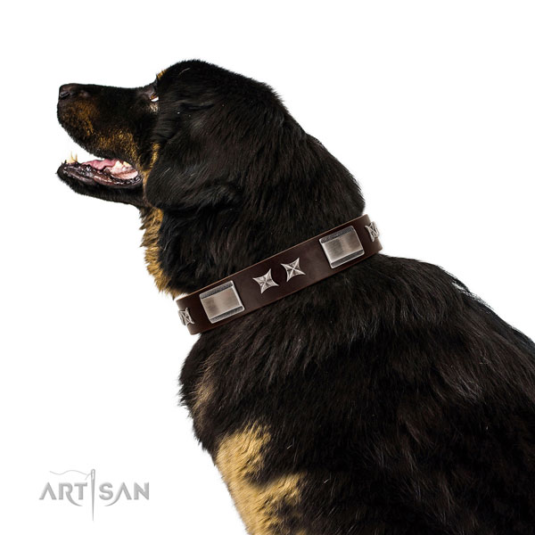 Decorated collar of full grain natural leather for your attractive canine