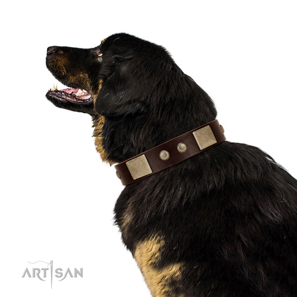 Corrosion proof traditional buckle on genuine leather dog collar for easy wearing