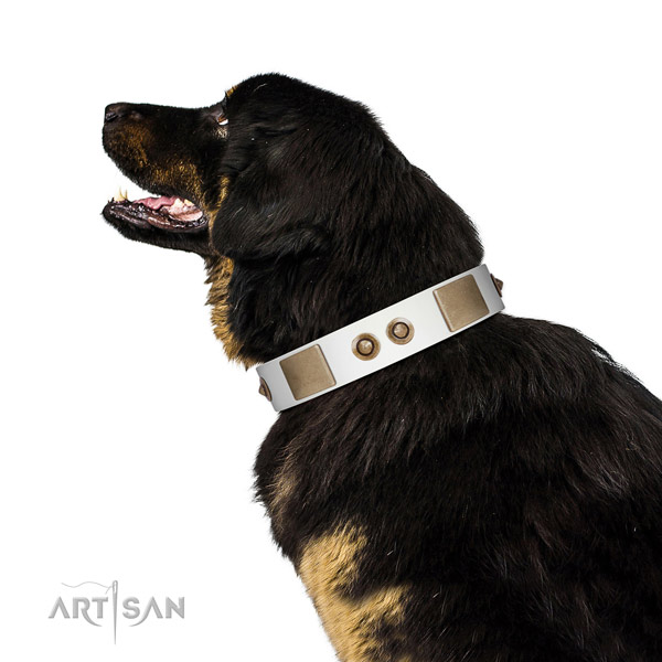 Basic training dog collar of natural leather with exceptional adornments