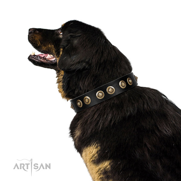 Stylish walking dog collar of genuine leather with designer adornments