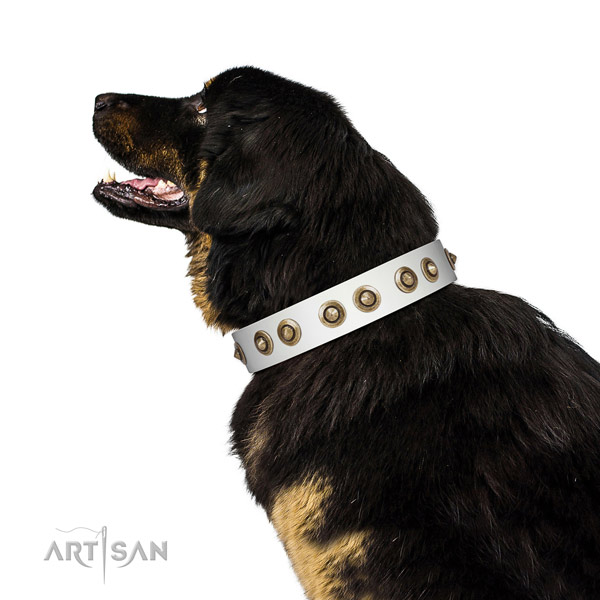 Daily use dog collar of genuine leather with unusual embellishments