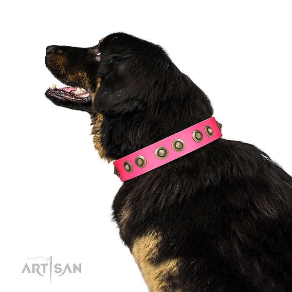 Leather collar with adornments for your stylish dog