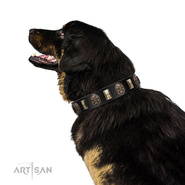 Genuine leather collar with studs for your lovely dog