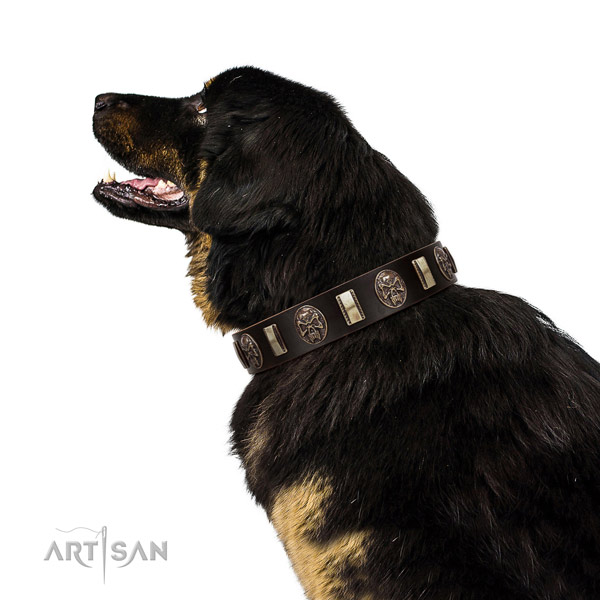 Full grain genuine leather collar with embellishments for your attractive four-legged friend