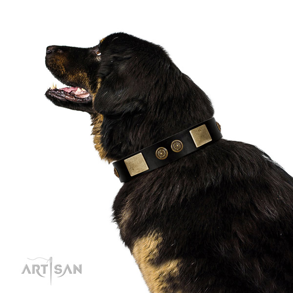 Rust-proof hardware on genuine leather dog collar for everyday use