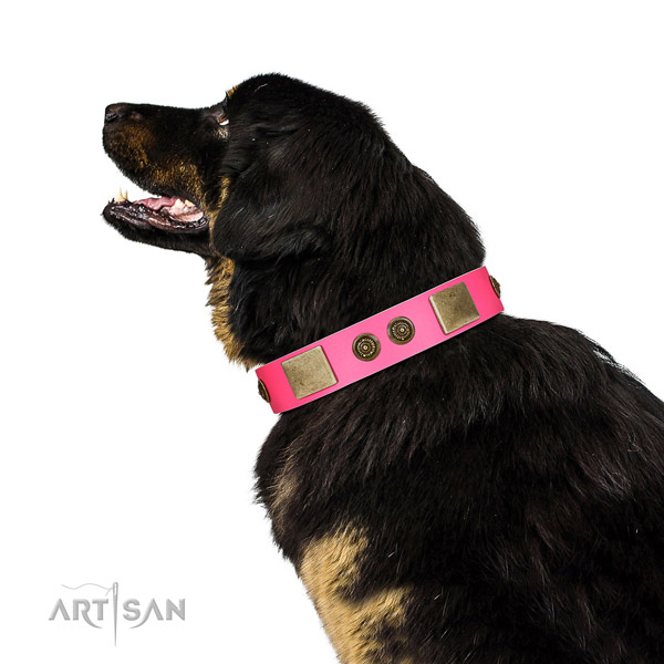 Top notch dog collar created for your beautiful dog