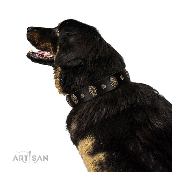 Daily walking dog collar of natural leather with designer embellishments