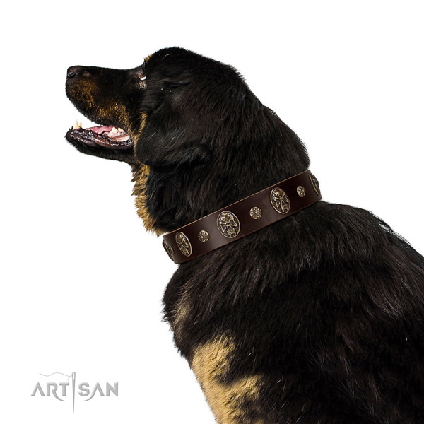 Walking dog collar of natural leather with unusual decorations