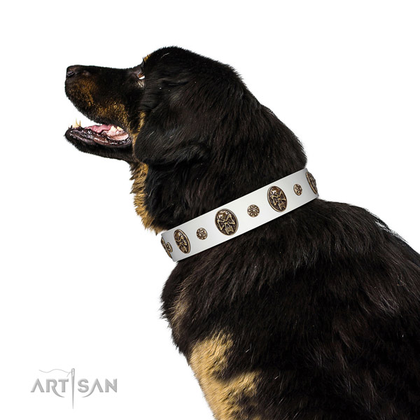 Fancy walking dog collar of natural leather with impressive adornments