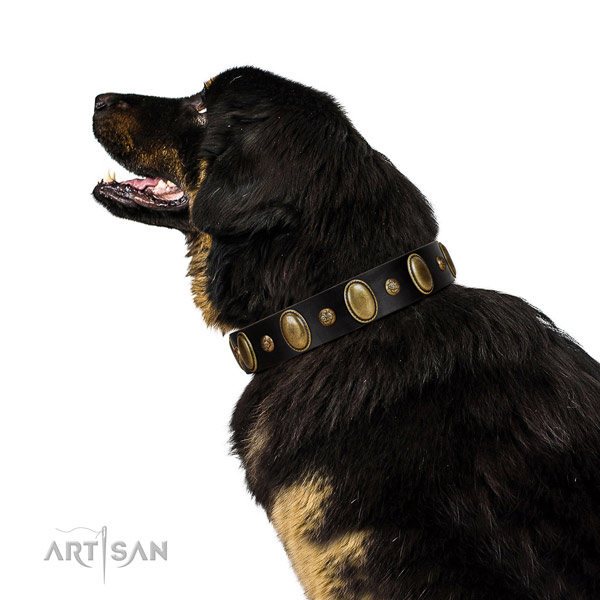 Natural leather dog collar of top rate material with designer embellishments