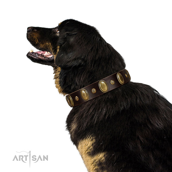 Genuine leather dog collar of top notch material with stylish decorations