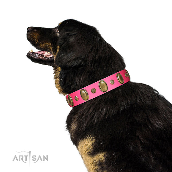 Everyday use flexible full grain natural leather dog collar with embellishments