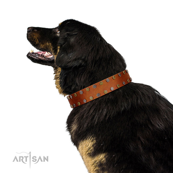 Daily use flexible natural leather dog collar with embellishments