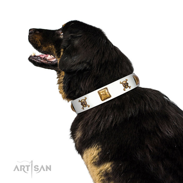 Incredible leather dog collar with corrosion resistant decorations