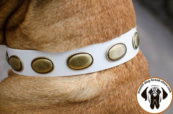 White leather Bullmastiff collar with oval brass plates - close-up