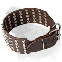 Studded dog collar for Mastiff with proportional rows of studs