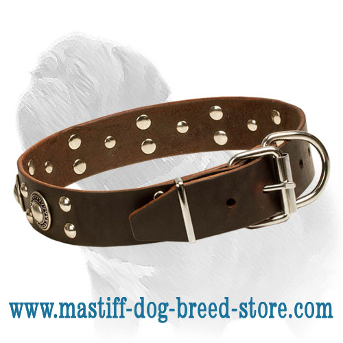 Leather collar for Mastiff breed handling