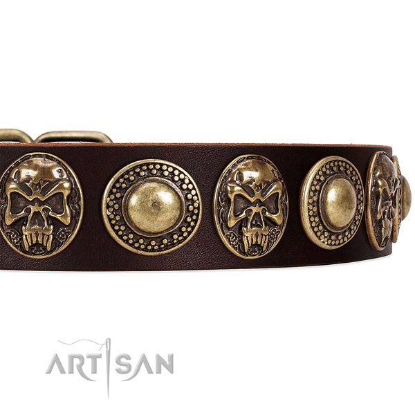 Genuine leather dog collar with studs for stylish walking