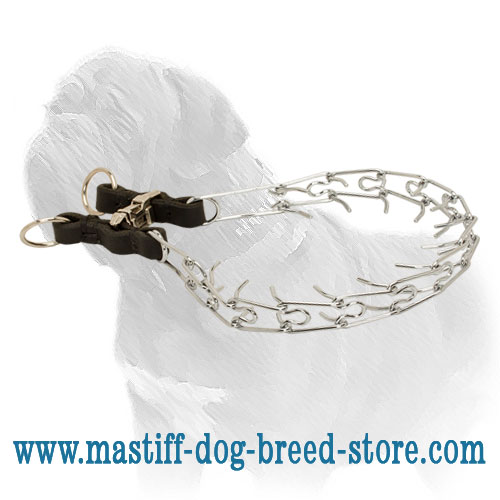 Reliable steel collar for Mastiff control