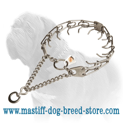 Dog pinch collar for Mastiff obedience training