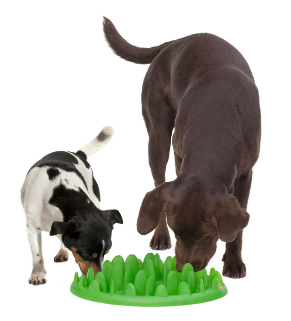 Feeder Suitable for Two Dogs