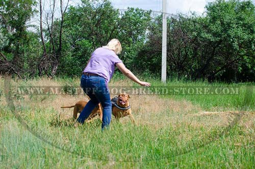 Tracking Nylon Canine Harness for Mastiffs