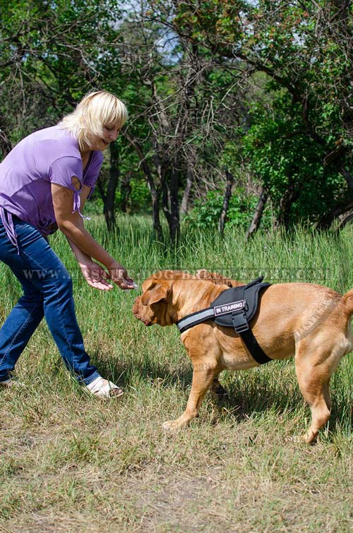 High Quality Nylon Dog Harness for Mastiffs