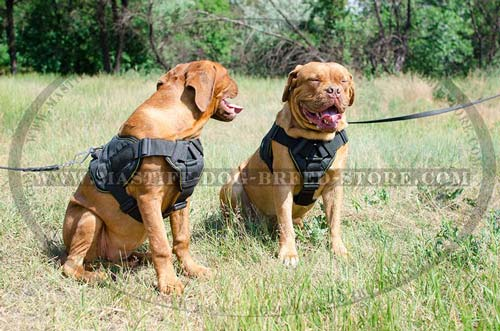 Reliable Tracking and Training Canine Harness for Mastiffs