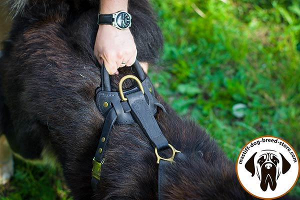 Super strong leather Mastiff harness with easy-grip handle