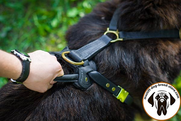 Easy-to-use leather Mastiff harness with quick-release buckle