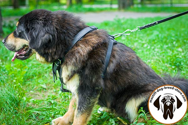 Leather canine harness for Mastiff with easy-adjustable straps