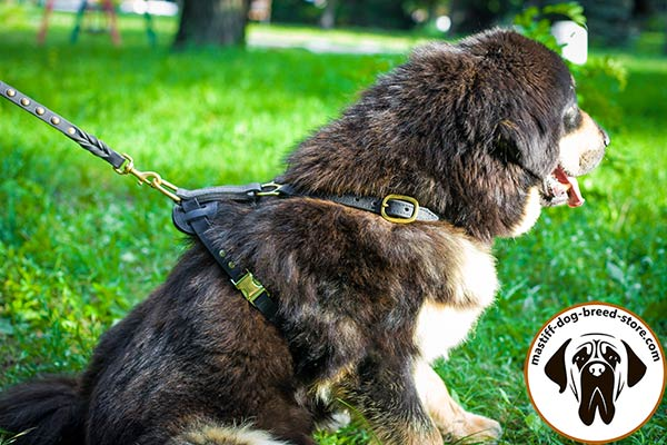 Reliable leather canine harness for Mastiff with quick-release buckle