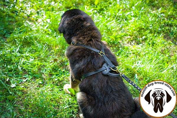 Working leather canine harness for Mastiff with quick-grab handle