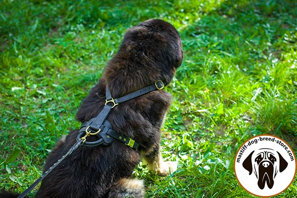 A-grade leather dog harness for Mastiff with brass fittings