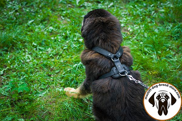 Long-lasting leather dog harness for Mastiff with rust-proof hardware