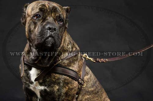 Leather Canine Harness for Mastiff Walking, Tracking and Pulling