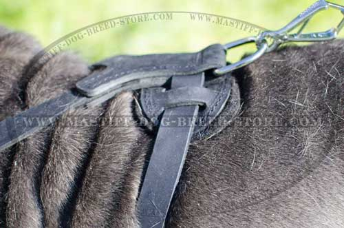 Easy to Fit Leather Canine Harness for Daily Walks and Training