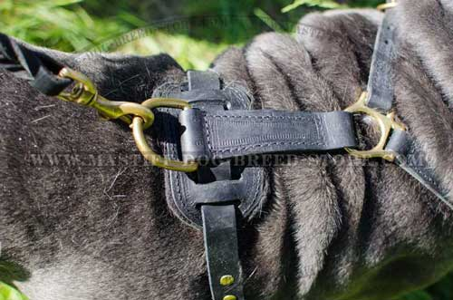 Easy Mastiff Dog Walking with Leather Harness' Comfy Ring for Leash Hook Up