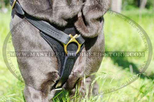 Leather Canine Harness Small Chest Plate for Comfortable Exercising
