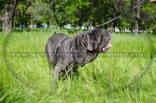 Mastiff Leather Harness for Dog Walking and Training
