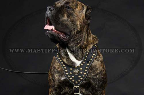 Studded Leather Canine Harness for Daily Walks and Training