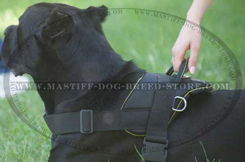 Mastiff Nylon Harness for Training and Daily Walks