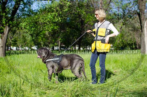 Mastiff Breed Walking and Training Harness
