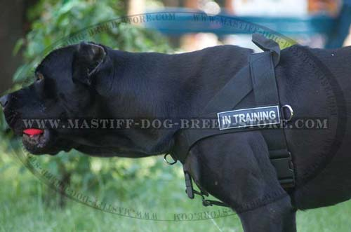 Adjustable Nylon Mastiff Harness with Identification Patches