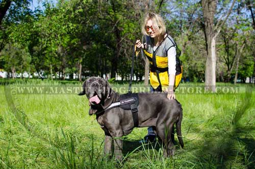 Identification Dog Harness for Tracking, Training, Guarding and Safe Walking